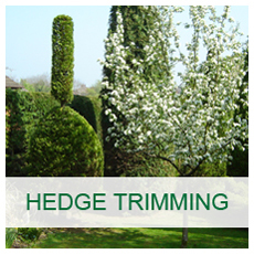 Basic Arbor Hedge Trimming