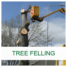 Basic Arbor Tree Felling